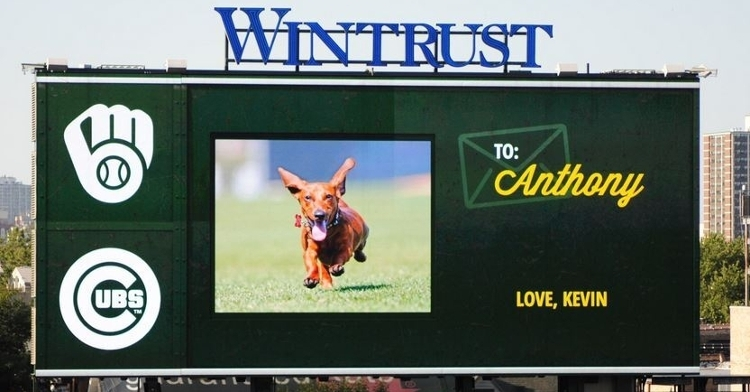 Anthony Rizzo's dachshund, Kevin, made an appearance on the Wrigley Field videoboard.
