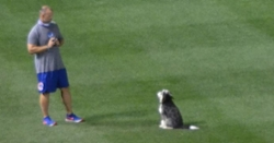 WATCH: David Ross playing catch with his dog at Wrigley Field