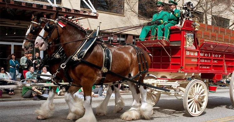 Budweiser Clydesdales reportedly coming to Clemson