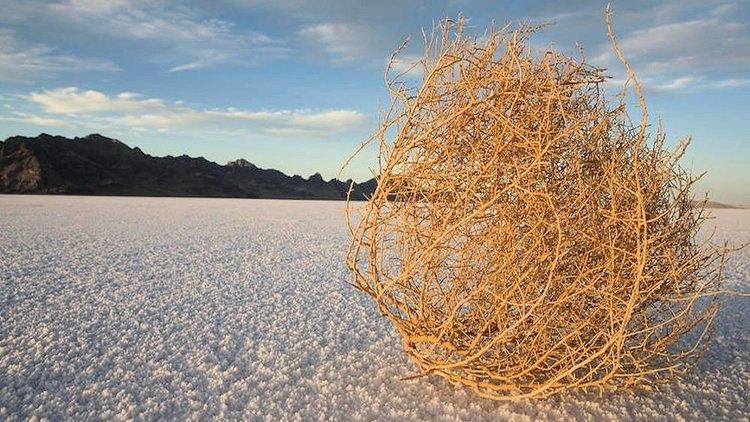 Dabo Swinney talks about seeing his first tumbleweed